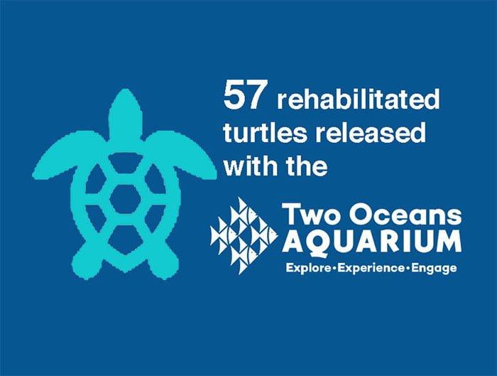 Chris Bertish Foundation Two Oceans Aquarium